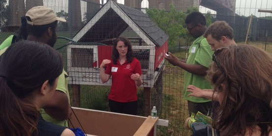 CCE Sullivan teaching NYC urban poultry program