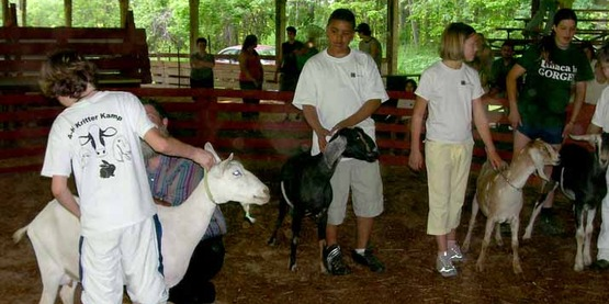 Showing animals at Kritter Kamp 2006.