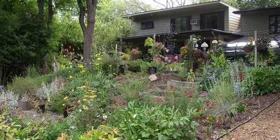 Shady perennial gardens