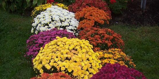 Master Gardener Fall Garden Gala