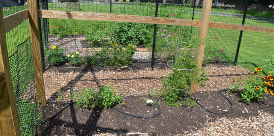 IPM Demonstration Garden at Rockland CCE July 2015