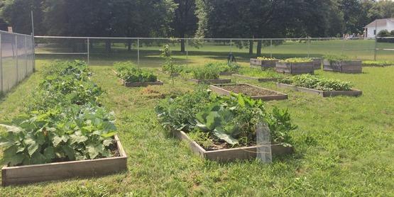 Chemung County Community Garden