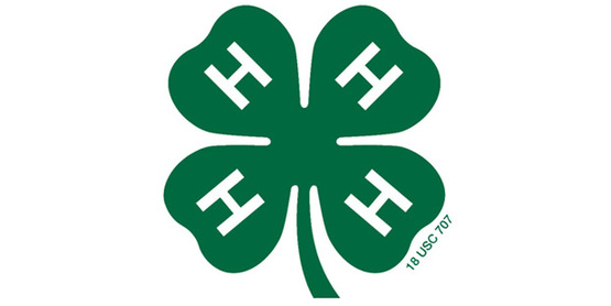 Official 4-H clover icon, sized smaller in relation to the field.