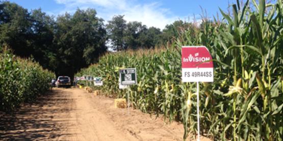 Corn Plot Field Day 2014