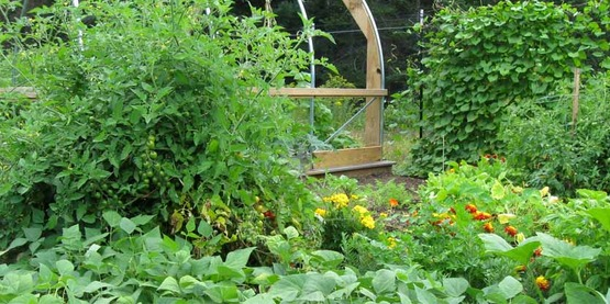 Let us help you get started with vegetable gardening!