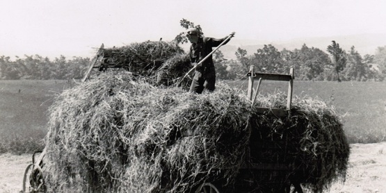Hay production 1943