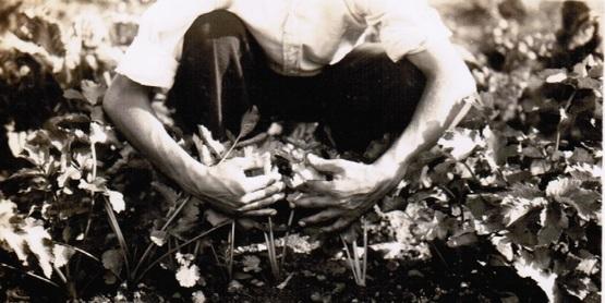 Garden, Glenville 1935