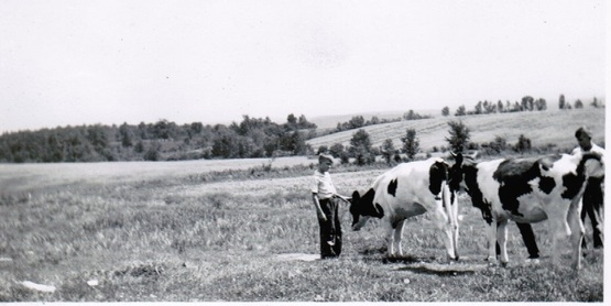 4H youth and their heifers, 1942