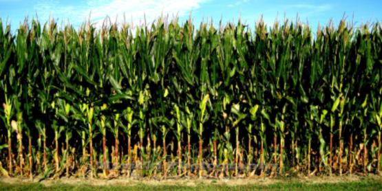 NWNY Corn Congress - Waterloo, NY