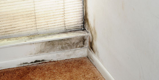 After flood waters recede, dangerous mold spores can begin to grow within 24 to 48 hours on a variety of household surfaces.