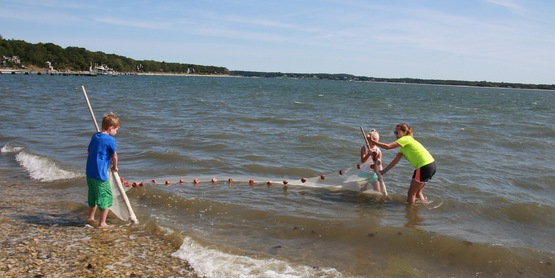 Youth Education - Seining at Cedar Beach, Southold