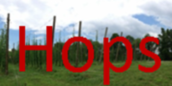 Northeast Hops News