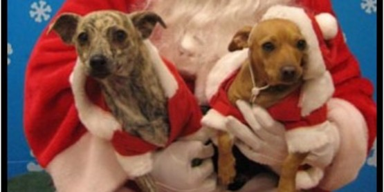 Bring your pooch or favorite pet for a Santa photo!