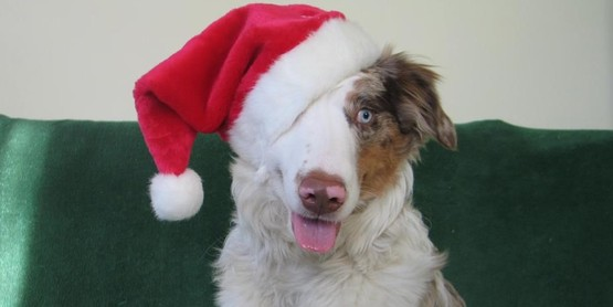 Support the 4-H Dog Program
