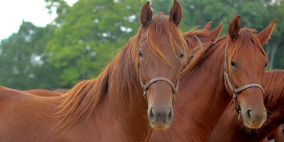 Horses at Willowbrook Farm.