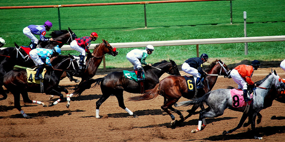 Horses can be raised for racing, equestrian or shows