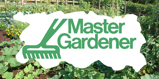 Ask A Master Gardener - Winter Hours