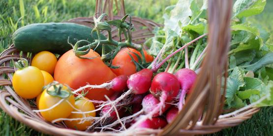 Harvest CCE