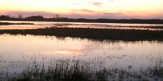 Iroquois National Wildlife Refuge wetlands