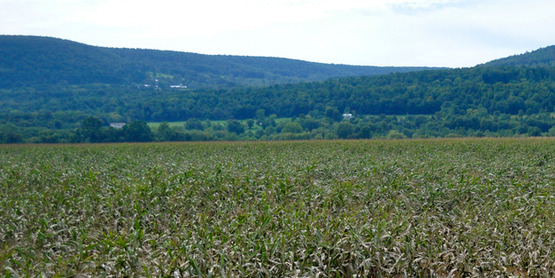 Damaged crops in Schoharie County (NY) after Hurricane Irene passed through on August 28, 2011.