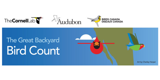 bird count logo