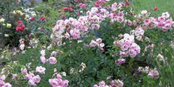 Der Rosenmeister Gardens