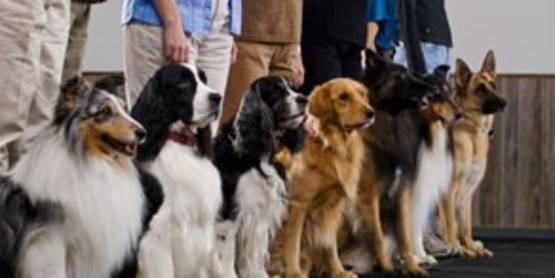 133664b62e5a5 Cornell Cooperative Extension | Canine Training Classes