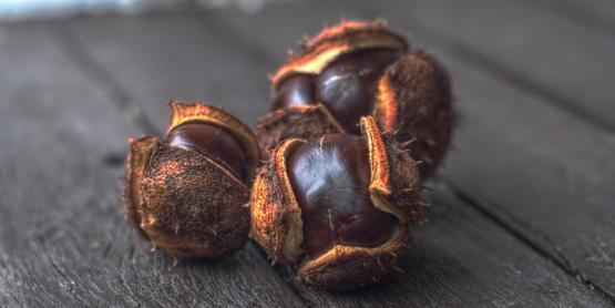 Nut Grafting Workshop