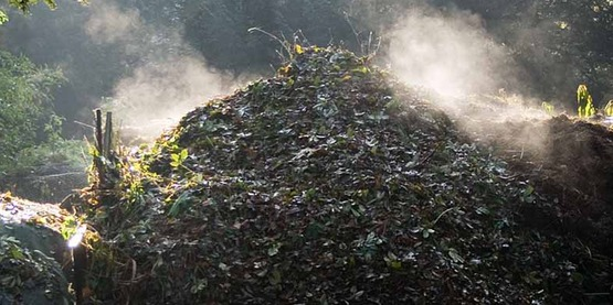 Compost heap on a frosty morning. The rising steam shows that the bacterial action in the compost heap is exothermic.