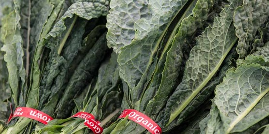 "Organic ""dinosaur"" kale grown at Ground Stew Farms in San Martin, Monterey County, CA on Sunday, Aug. 23, 2015. Ground Stew Farms products are sold every Sunday at the Jack London Square Farmers Market in Oakland, CA. The market organizer here uses a token system for people who want to use debit and the U.S. Department of Agriculture's (USDA) Food and Nutrition Service (FNS) Electronic Benefits Transfer (EBT) card to help people in need. USDA Photo by Lance Cheung."