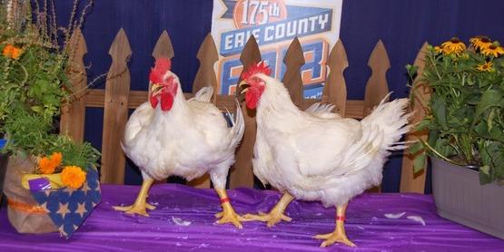 2014 Chickens