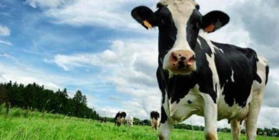 Sundae on the Farm