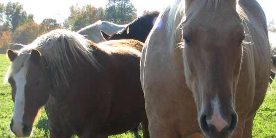 AWESOME Equine & Dairy 101
