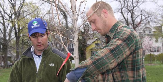 Olmstead Tree Planting