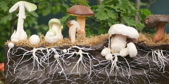 Cultivating Forest Mushrooms