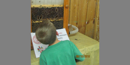 Inside the bee hive