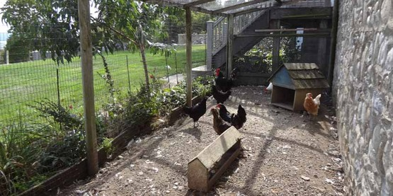 chicken coop in Filios Garden, 2016 Open Days Garden Tour site