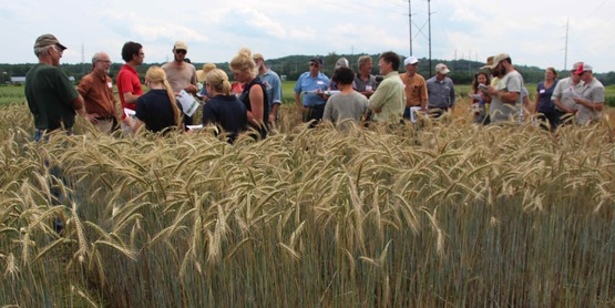 Small Grains Day 2015