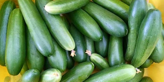 cucumbers,  from Roots & Wisdom (Schenectady County) Facebook page