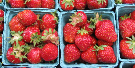 Strawberries are a summer u-pick crop!