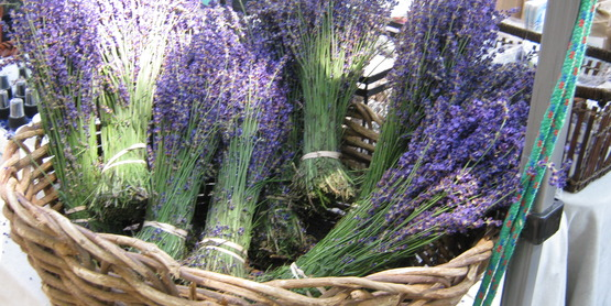 Lavender Farming For Beginners