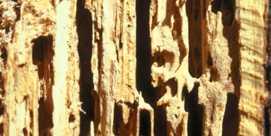 woodlot2