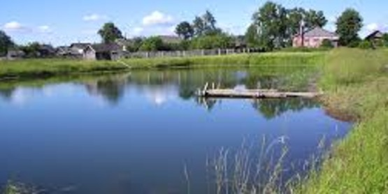 Pond Planning, Construction and Care