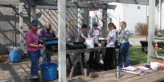Master Gardeners potting up perennials for the plant sale in May