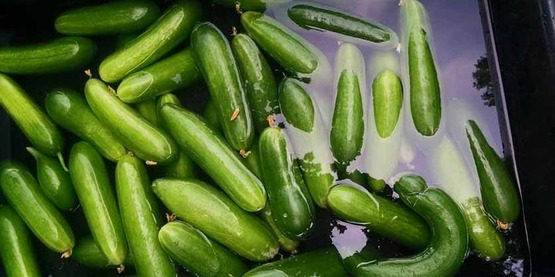 washing cucumbers,  from Roots & Wisdom Facebook page