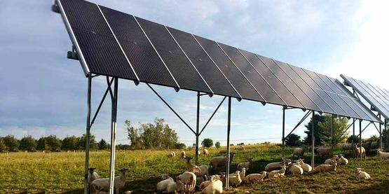 Land used for solar is compatible with other uses.