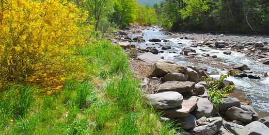 Join the Ashokan Watershed Stream Steward Volunteers! www.ashokanstreams.org