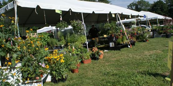 Plant Sale Tent