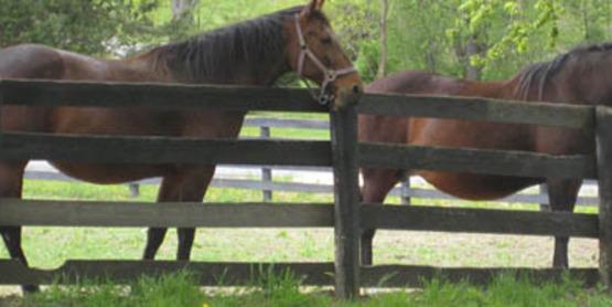 equine, horses
