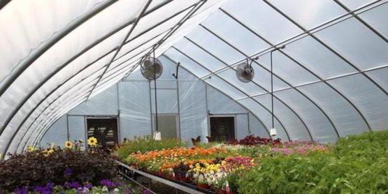 Greenhouse Biocontrol Demonstration Series
